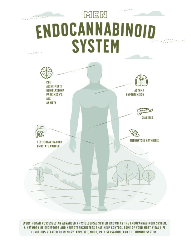 Endocannabinoid System for Men Infographic