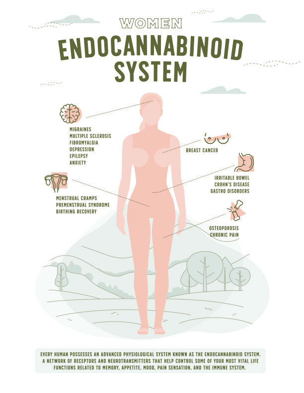 Endocannabinoid System for Women Infographic