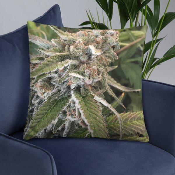Big Bud Pillow